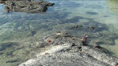Tidal pool with Sally Lightfoot crabs, Galapagos Islands Stock Footage