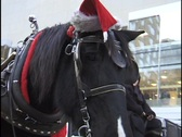 Stock Video Footage of Christmas Horse and Carriage Ride 1