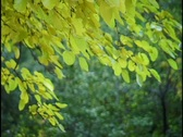Fall Leaves 2 Stock Footage