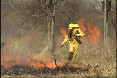 Firemen Spray Forest Fire 1 Stock Footage