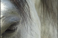 Horse Eye Close Up Stock Footage
