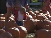 Little Boy Walking Through Pumpkin Patch Stock Footage