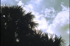 Palm Tree Time Lapse Stock Footage
