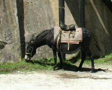Donkey Stock Footage