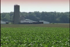 Soy Bean Field with Silo 3 Stock Footage