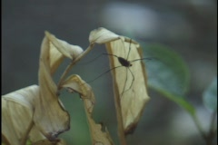 Spider on Leaf Stock Footage