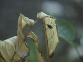 Spider on Leaf Stock Footage