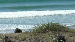 Tyyni valtameri / Waves / kaktus / Baja Kaliforniassa Arkistovideo