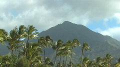 Hawaii Kauai palm trees and mountain - stock footage
