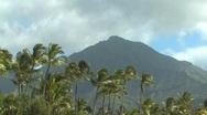 Stock Video Footage of Hawaii Kauai palm trees and mountain
