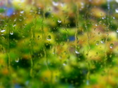 Raindrops on the window PAL & HD Available Stock Footage