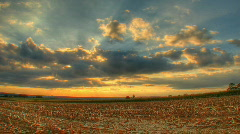 Hdr motion time lapse of sunset over corn fields Stock Footage