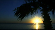 Stock Video Footage of Sunrise Sea of Cortez with Palm tree and ocean