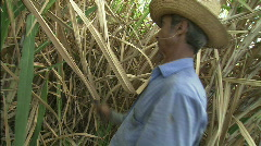 Man Cuts Cane Stock Footage