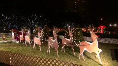 Santa's Reindeer Stock Footage
