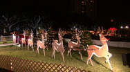 Stock Video Footage of Santa's Reindeer