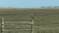P00053 Ferruginous Hawk Perched on Fencepost Stock Footage