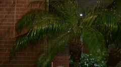 Wind Night Palm Tree Stock Footage