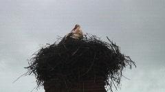Stork roman pool Stock Footage