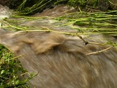 Stock Video Footage of muddy water running down a ravine in the Ecuadorian Andes
