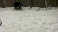Dog running in the snow Stock Footage