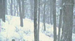 Winter Storm in the Woods (5 of 6) Stock Footage