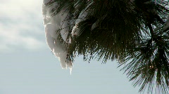 Melting snow on tree branch Stock Footage