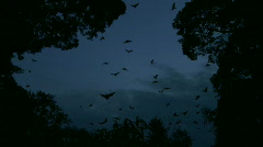 Huge lot of Bats Flying - Zoomed Shot Stock Footage