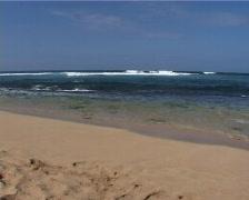 Seal Surfer Hawaii 01 Stock Footage