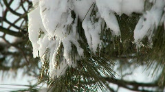 Melting snow on tree branch 2 Stock Footage