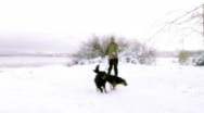 Stock Video Footage of skier with dogs