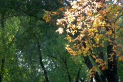 Autumn 8 Stock Footage
