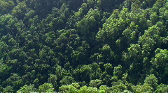 Sub-Tropical Rainforest Panned Overhead View - stock footage