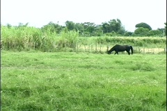 Horse in the Farm Stock Footage
