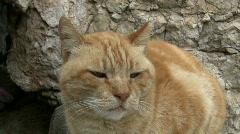 Neutered stray cat Stock Footage