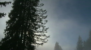 Misty trees time lapse Stock Footage