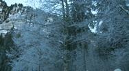 Winter forest scene Stock Footage