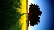Vertical tree at sunrise Stock Footage