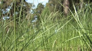 Stock Video Footage of Spring grass