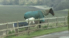 Two horses stand quietly at fence Stock Footage