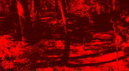 HUNTED! Forest chase scene. Stock Footage