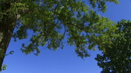 Blue Sky and Trees Tilt Down to Path Stock Footage