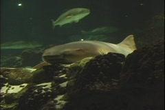 shark 2 - stock footage