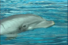 Dolphin 1 Stock Footage