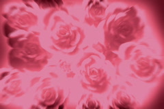 PinkRoses 20 2997 - stock footage