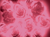 Stock Video Footage of PinkRoses 20 2997