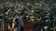 HD1080i Horses in Winter. Stock Footage