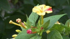 Yellow flower Stamen close up  Stock Footage