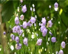 flowers  - stock footage