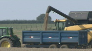 Stock Video Footage of New Holland combine harvester empties wheat into trailer.